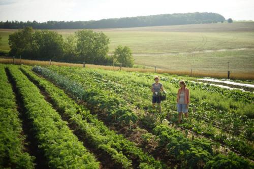 zelinářské úspěchy 2020